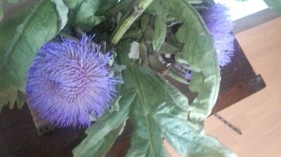 アーティチョーク 栽培 開花